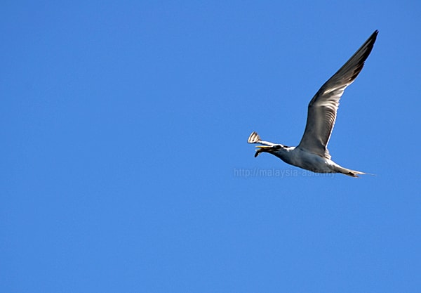 Alor Island Bird Watching