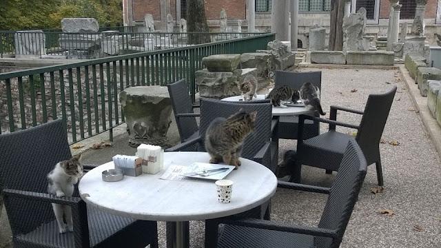 feral cat archaelogical museum istanbul turkey