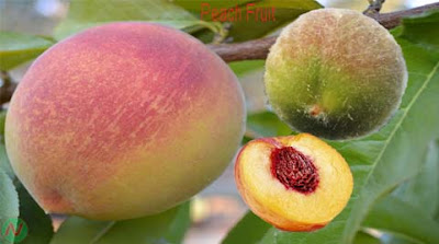 peach fruit; peach