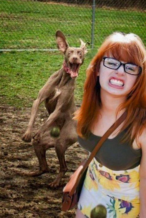 Funny Hilarious Doggie Photo Bomb Picture