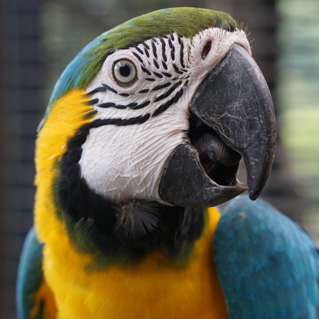 福岡市動物園ブログ: 今週末は「オウム・インコデー」特別企画を開催し ...