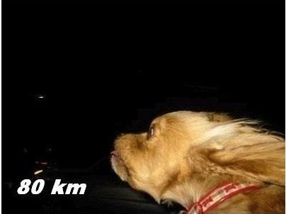 Tampang Lucu Anjing Jika Diajak Ngebut
