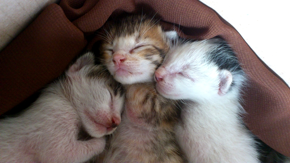 Tips Mudah Merawat Anak Kucing Yang Baru Lahir