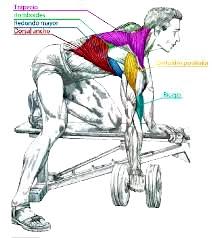 Remo mancuerna espalda ejercicio hombre rutina