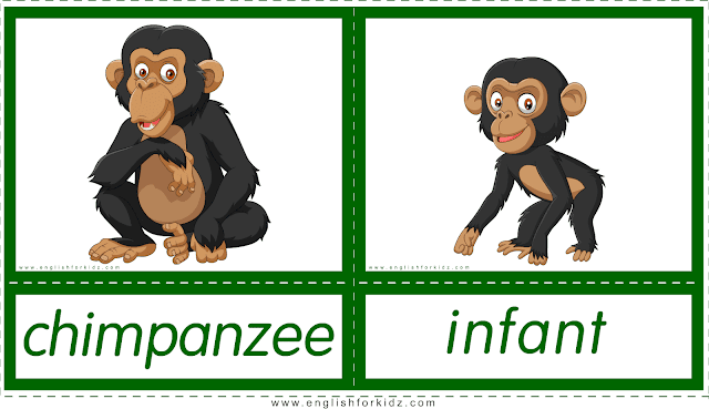 Animals and their babies -- chimpanzee - infant -- printable flashcards