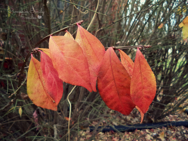 Leaves of a burning bush
