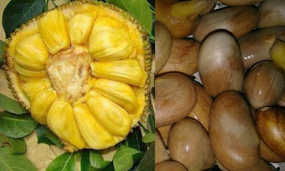 20 Benefits Boiled Jackfruit Seeds For Health - Healthy T1ps