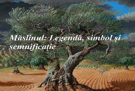 Măslinul: Legendă, mit, simbol și semnificație