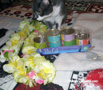 CK and Tiki Cat Invite You to a Hawaiian Luau #ChewyInfluencer