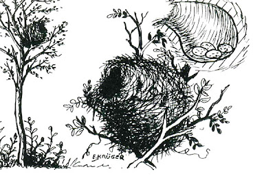nido de Benteveo Pitangus sulphuratus