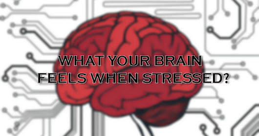 Know What Your Brain Feels When Being Stressed?