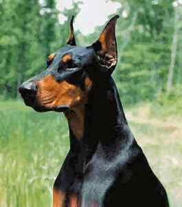 Von Willebrand Disease In Dogs What Breeds