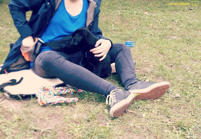 Schwarzer Labrador Welpe in der Welpenschule