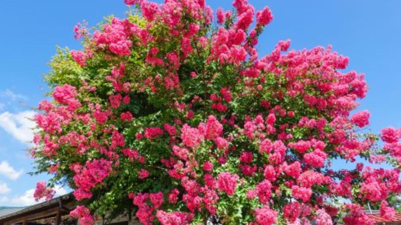 5 Trees That Bloom All Summer Woman Elan Vital Davao Lifestyle