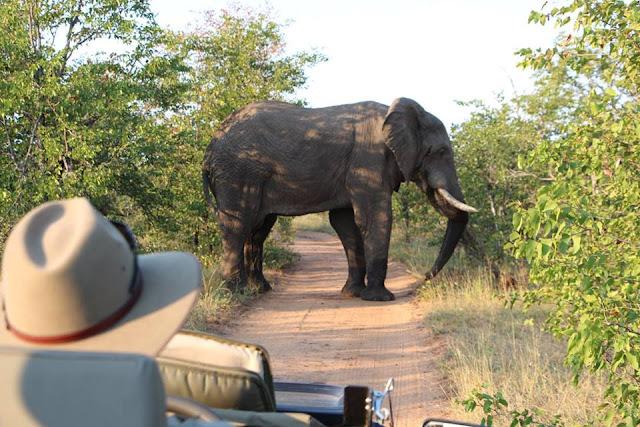 Elefante en el Parque Kruger, Sudáfrica