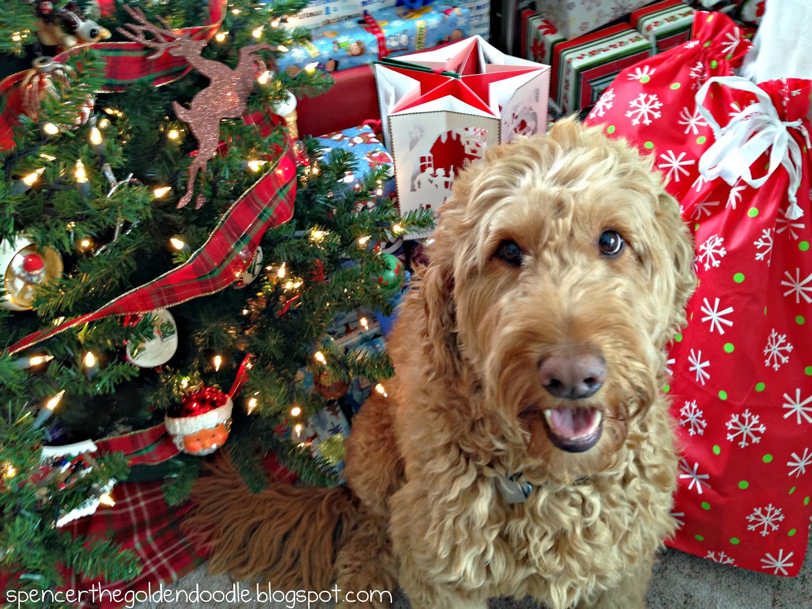 christmas tales - Goldendoodle Christmas Decorations