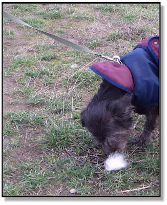 Nasenarbeit für den Hund