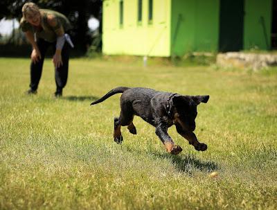 dog training in hindi in 2018 ( ful tips )