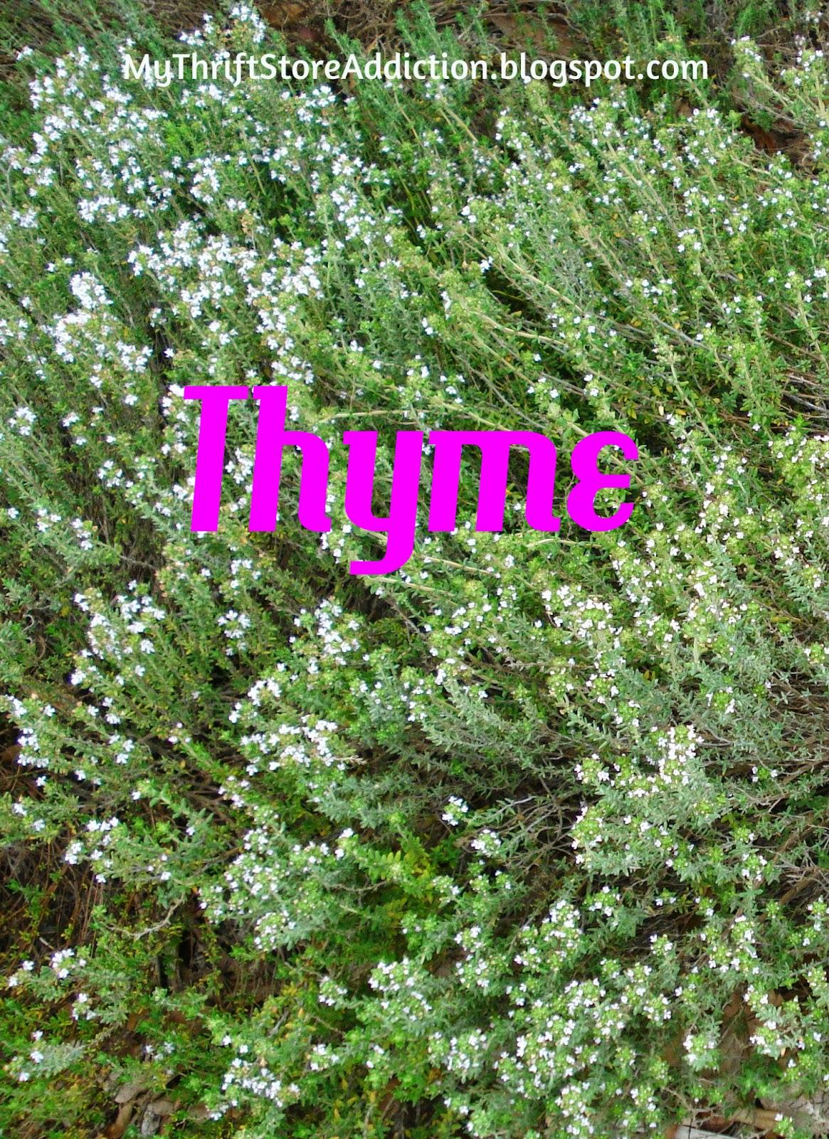 Health benefits herbs thyme