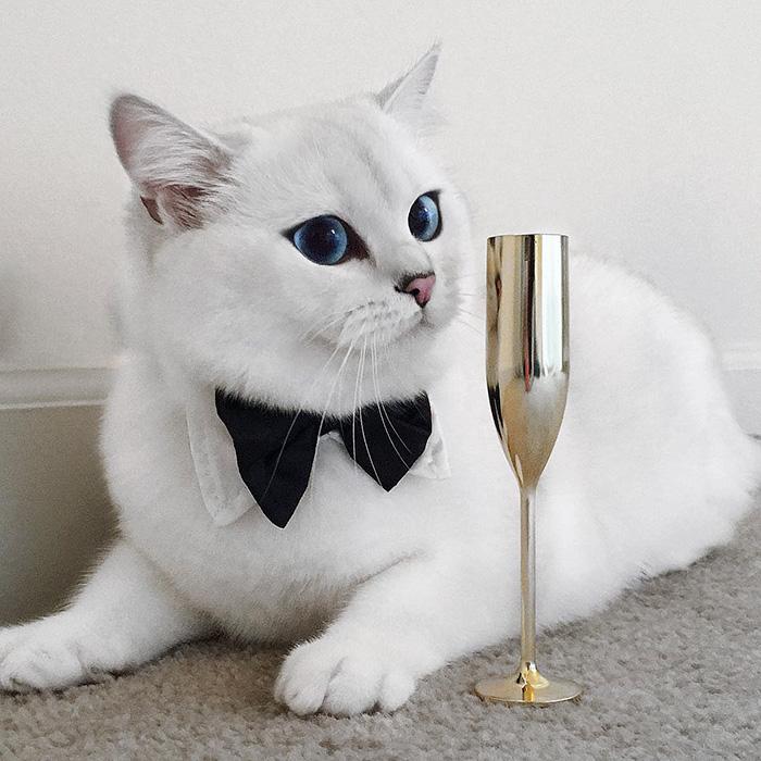 Este gato tem os olhos mais bonitos que você já viu