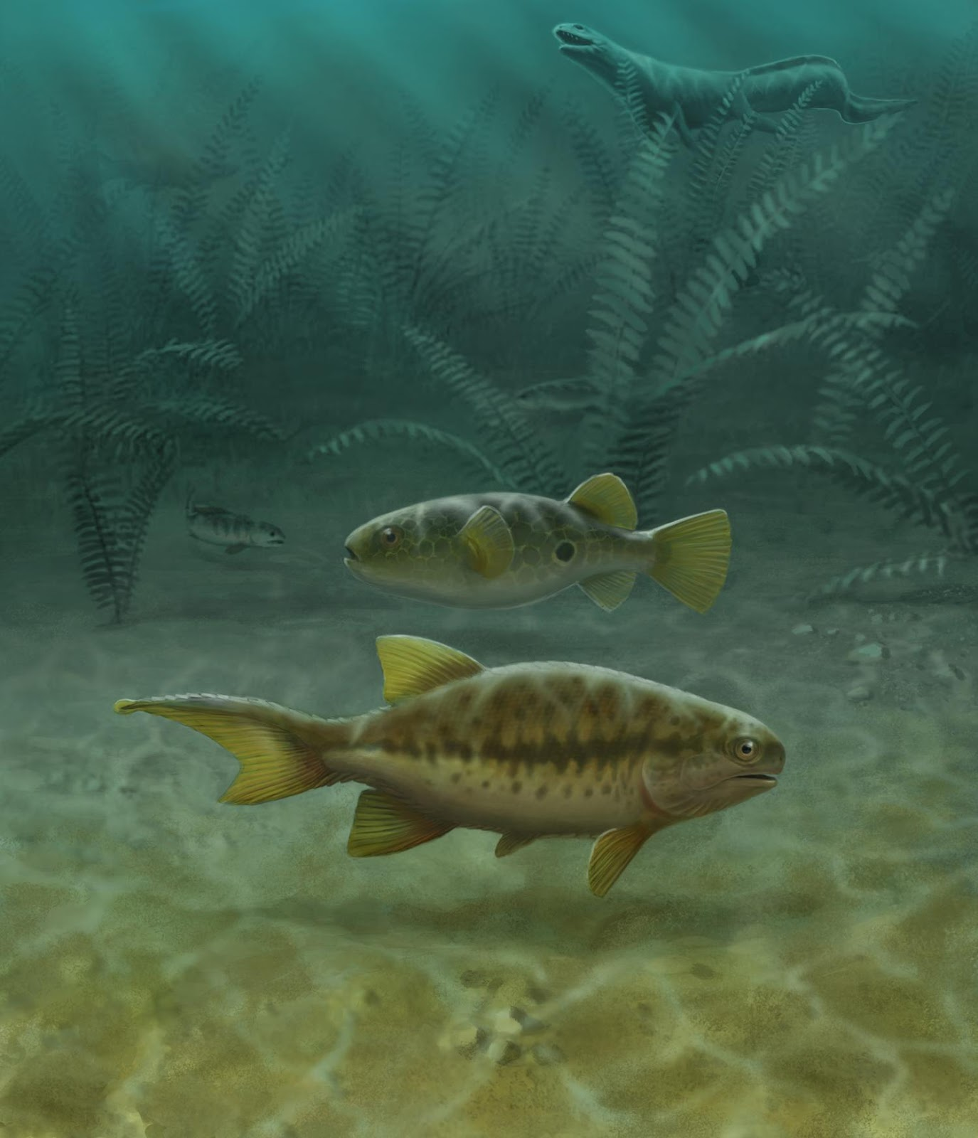 Fish fossils reveal how tails evolved
