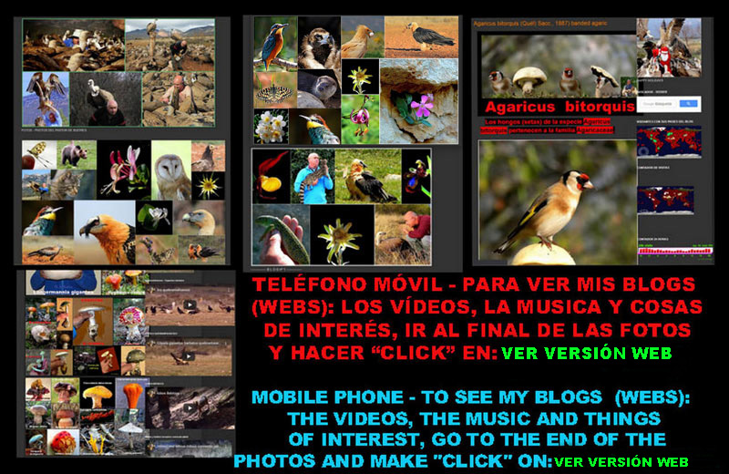 telefono-movil-mobile-phone--ver-blogs-webs-