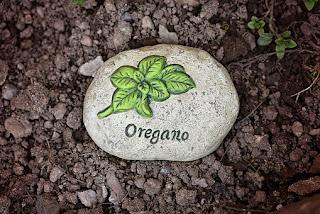 oregano-www.healthnote25.com