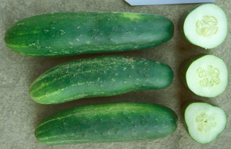 how to tell if cucumbers are bad