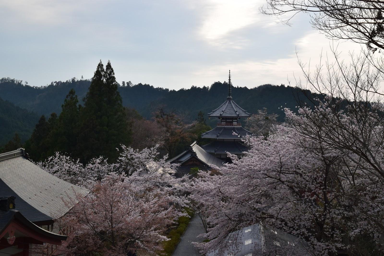 temples and sakura