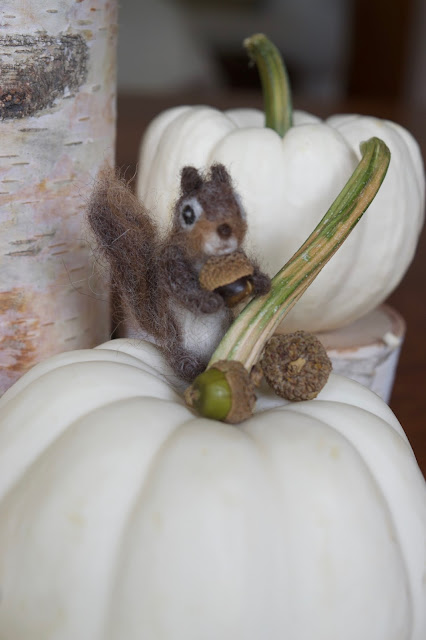 Tiny squirrel with miniature white pumpkin and tiny acorn