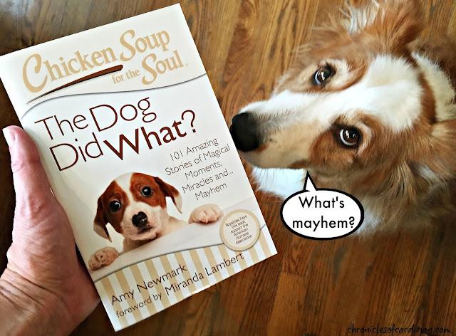 Image Result For Limited Ingredient Dog