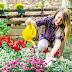 Cvetna oaza - humus i tri kesice semena cveća