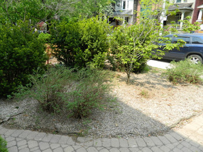 Leslieville summer garden cleanup after by Paul Jung Gardening Services Toronto