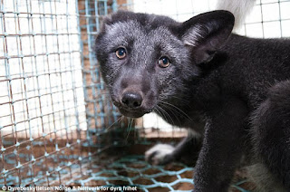 Over A Billion Animals Die Every Year As A Result Of The Fur Industry