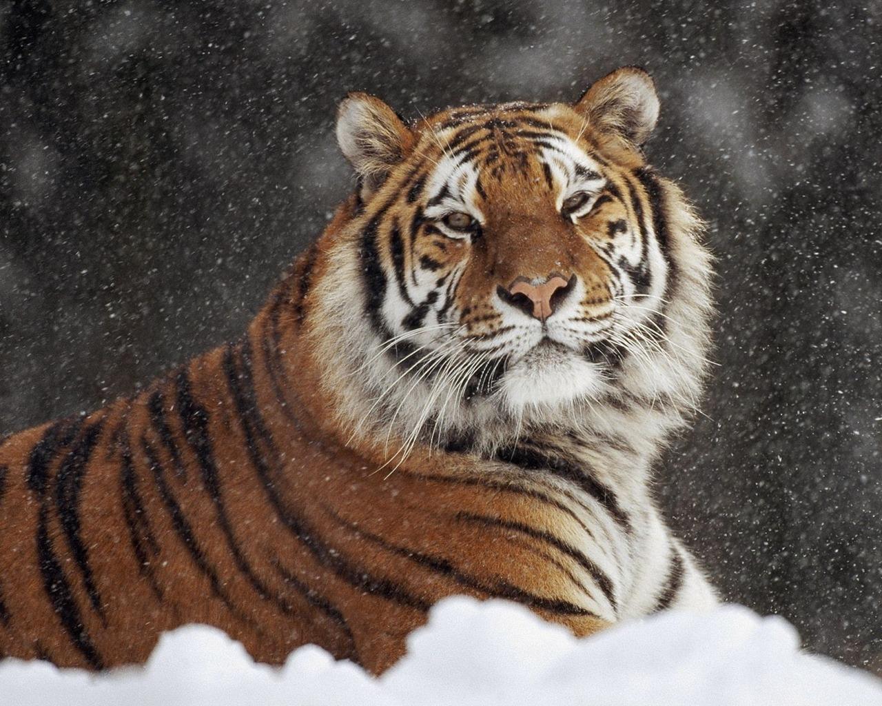 Animal Para Fondo De Pantalla: Imagenes /Fondos De Animales En Hd Para Descargar