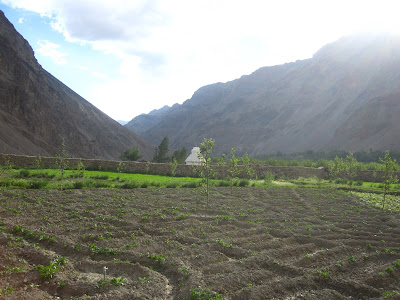 Tabo village, Tabo farms, Tabo spiti, Spiti valley