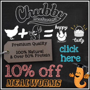 chubbymealworms