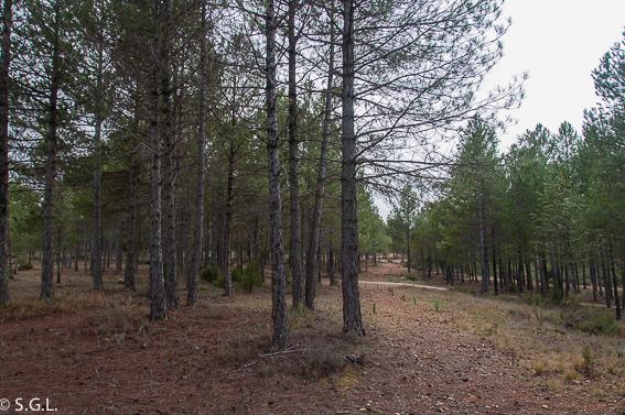 Camino lagunas de cañada del hoyo. Cuenca