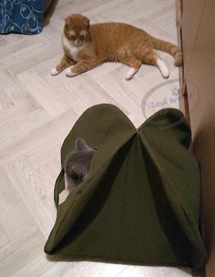 jak uszyć namiot dla kota