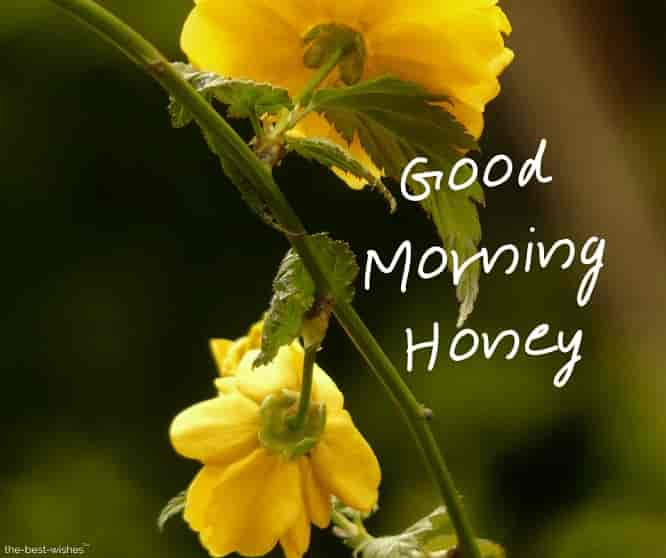 good morning honey flowers