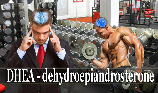 Хранителни добавки dhea странични ефекти
