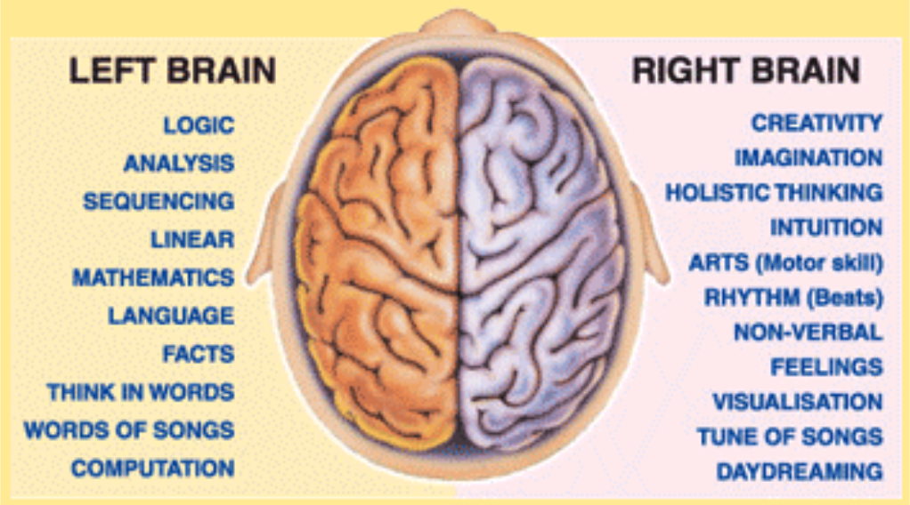 left brain vs right brain Right brain left brain the categories of right- and left-brained people likely originated from research conducted by neuropsychologist roger sperry throughout the 1970s and early 1980s, which tracked individuals who had undergone operations to sever the corpus callosum (the main structure connecting the two halves of the brain) as a treatment.