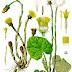 Kwiaty polne- tablice pokrojowe