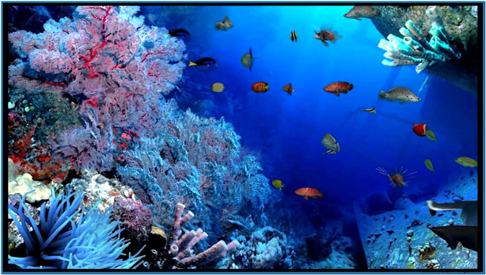 Animated Wallpaper Fish Aquarium Aquarium Screensavers 3d Wallpaper Best Hd Wallpapers