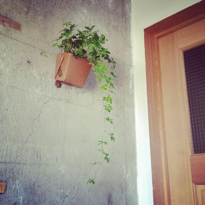 リノベーションマンションのコンクリ躯体表しの壁とドアとシュガーバインのグリーン
