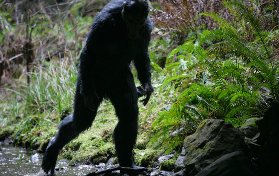 Bigfoot (Oh-mah): Hoopa First Nation Account