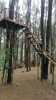 Wisata Pinus Pengger Jogjakarta