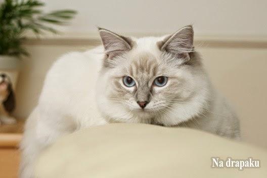 W jakim wieku można kastrować kota?