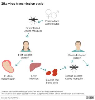 Penyebaran Virus Zika