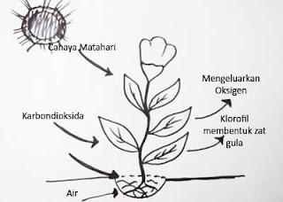 Gambar proeses fotosintesis pada tumbuhan